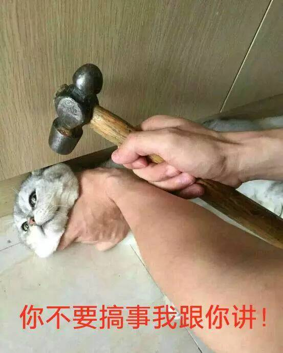 猫咪你不要搞事我给你讲